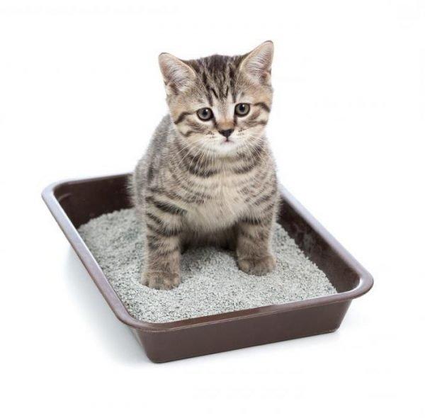Котёнок в туалете