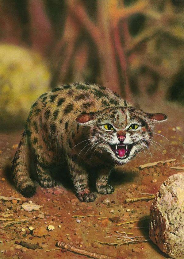 Черноногая кошка шипит