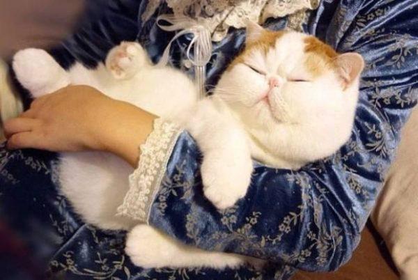 Кота Снупи из Японии держат на руках