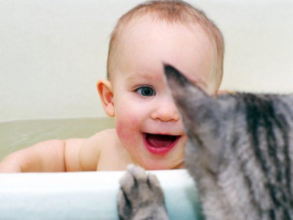 Кошка заглядывает в ванну, где купается ребёнок