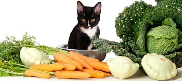Кошка и свежие овощи