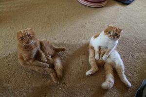 Кот и кошка сидят на ковре и смотрят вверх