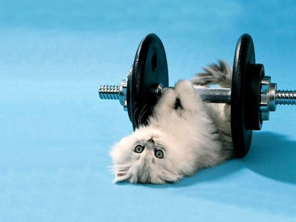 Кошка с гантелями