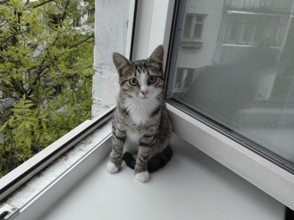 Кошка у открытого окна