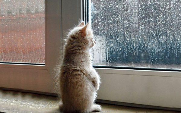 Кошка у окна