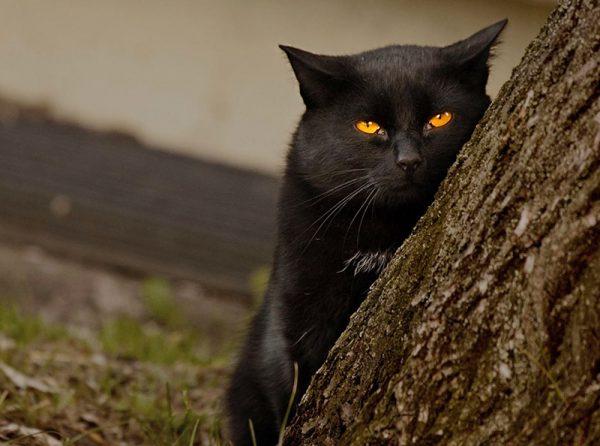 Чёрный кот за деревом