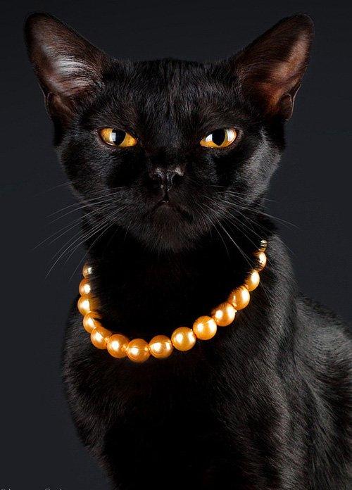 Чёрный кот в бусах