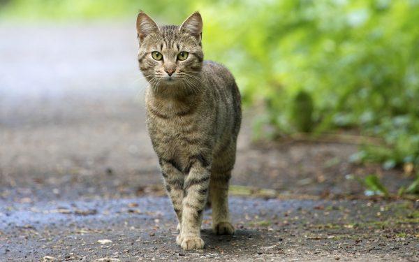 Кошка стоит на дорожке