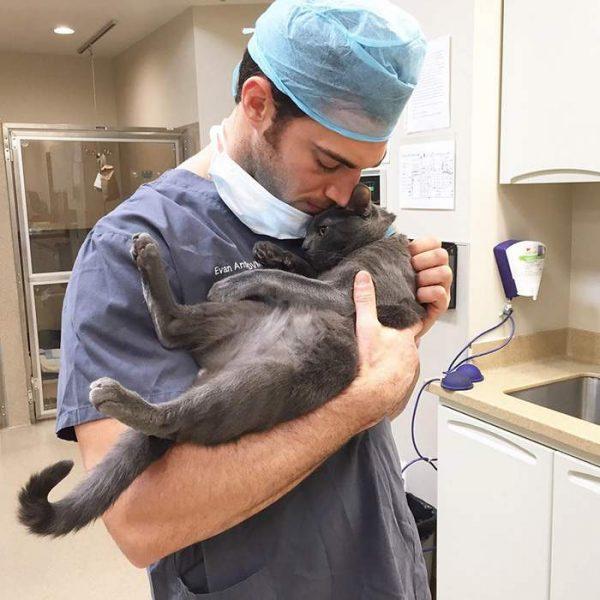 Кошка на руках у ветеринара