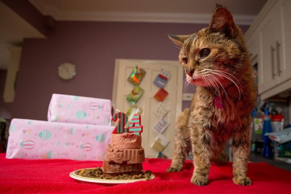 Пожилая кошка