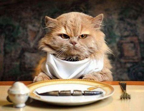 Рыжий кот за столом с повязанным на шею нагруднике