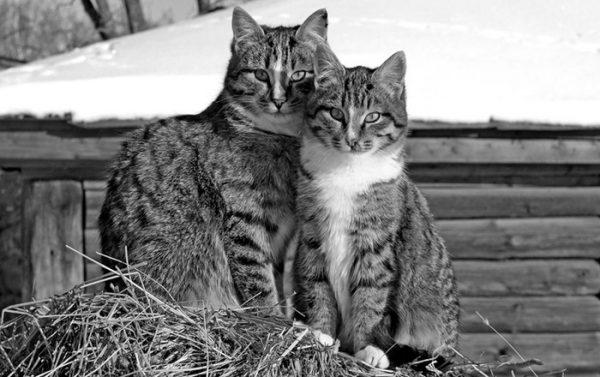 Кот и кошка сидят на сене