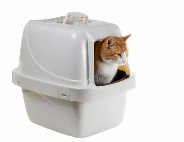 Кот в закрытом кошачьем лотке