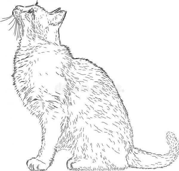 Рисунок кота в профиль