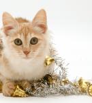 Рыжий ангорский кот сидит, запутавшись в новогодней мишуре