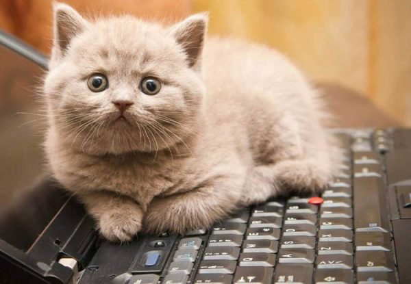 Кот на клавиатуре компьютера