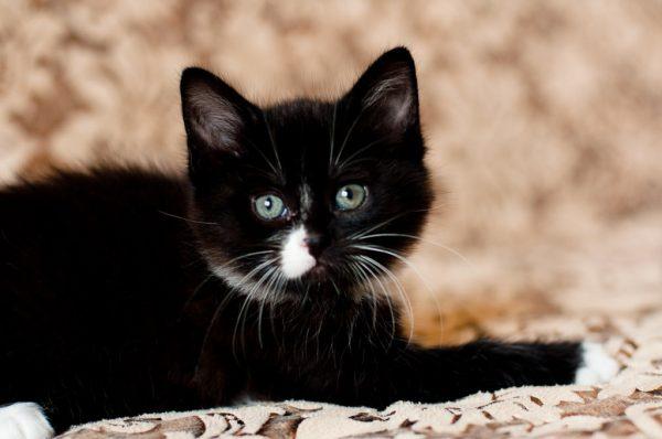 Котёнок-девочка