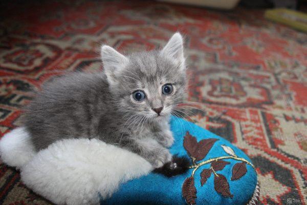Котёнок с тапкой