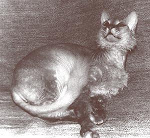 Кошка Варвара