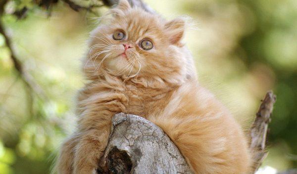 Толстый котёнок