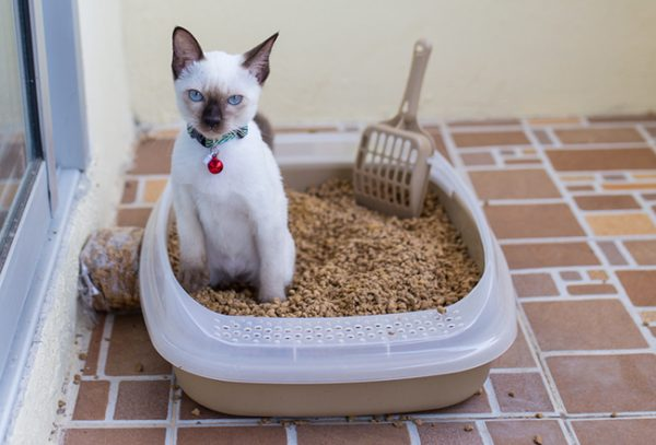 Кошка сидит в лотке