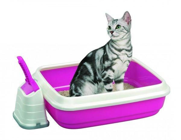 Кошка в розовом лотке