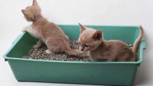 Два котёнка в лотке