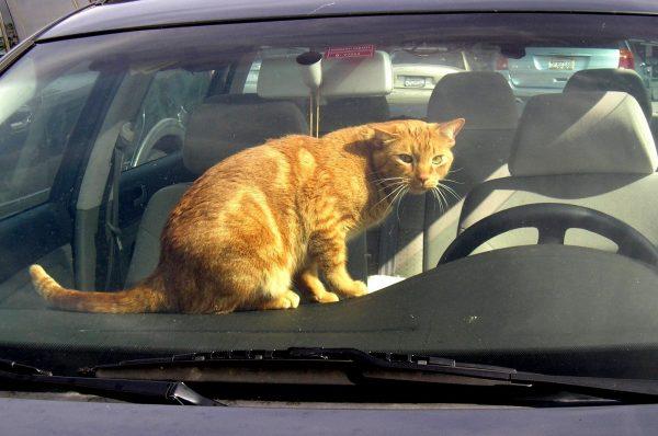 Кот в закрытой машине