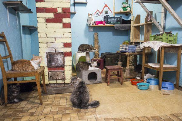 Много кошек в кошачьем приюте