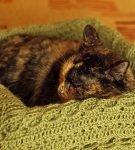 Кошка спит в родилке
