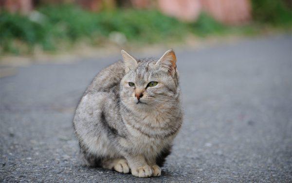 Серый уличный кот сидит на асфальте