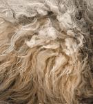 Серо-кремовая шерсть