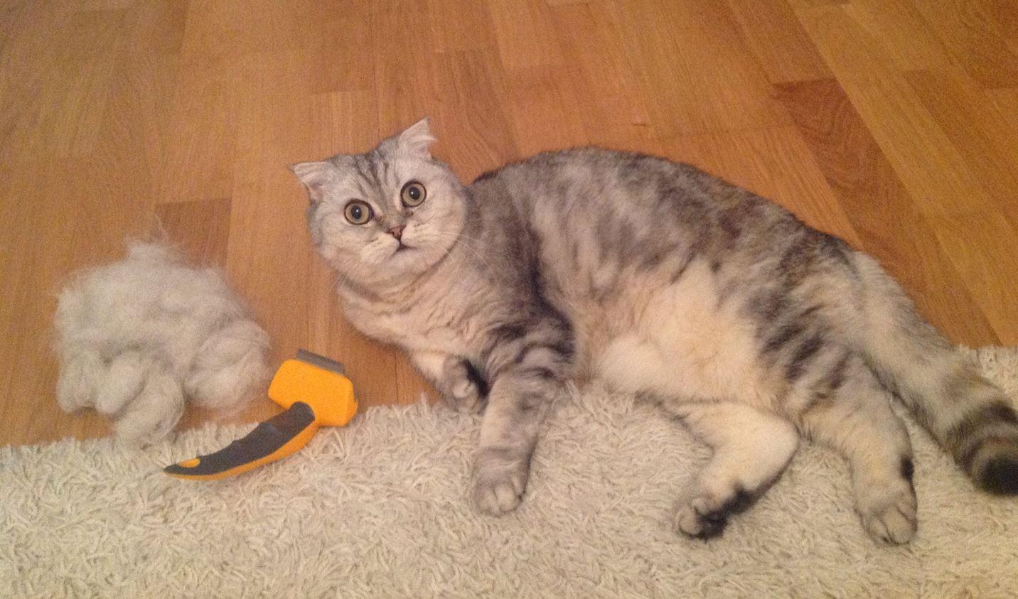 Фурминатор для кошек и котов: что это, как выбрать