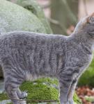 Серый в полоску кот без породы стоит на замшелых камнях