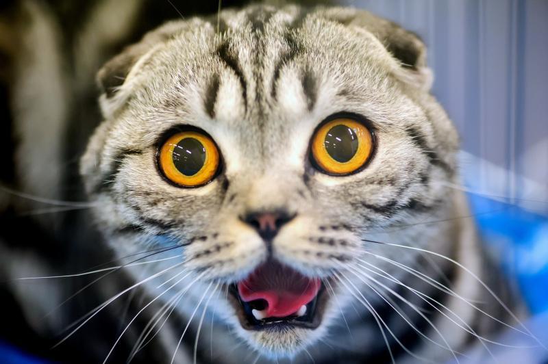 Кастрация кота: плюсы и минусы, в каком возрасте лучше делать, а также последствия и уход за животным