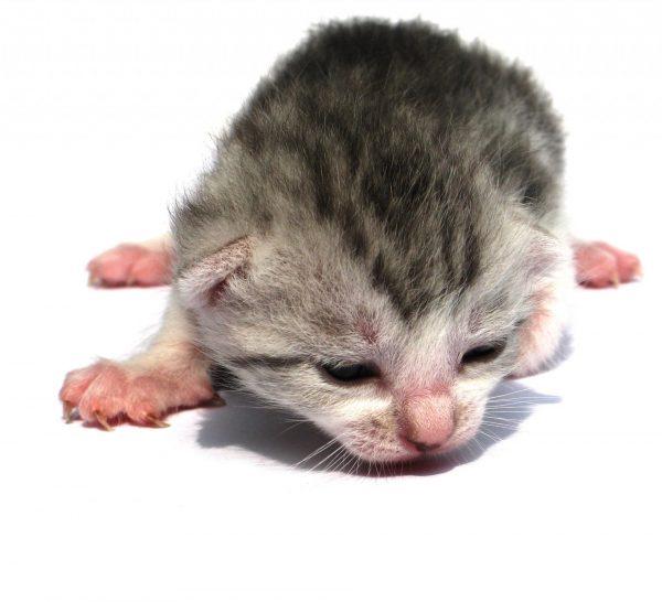 Слабый котёнок