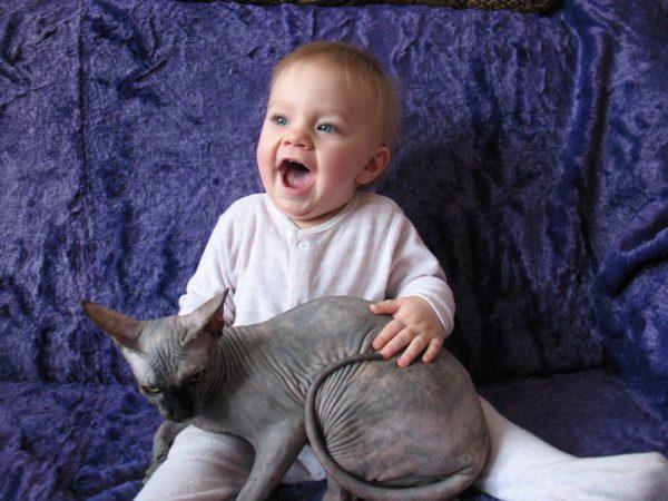 Канадский сфинкс с ребёнком
