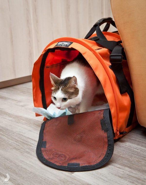 Кот переезжает