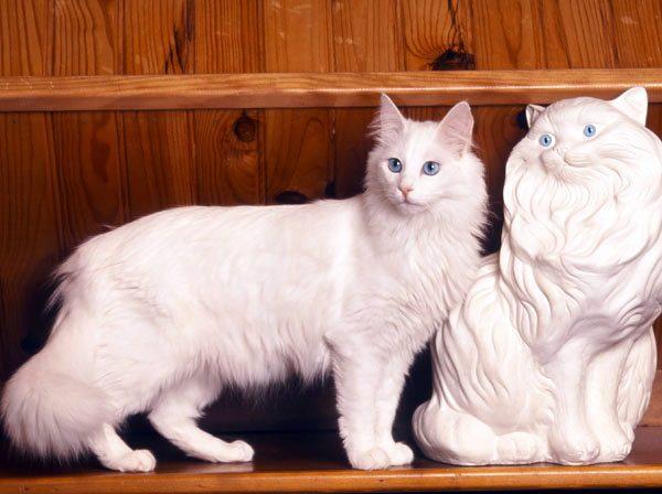 Ангора и статуэтка