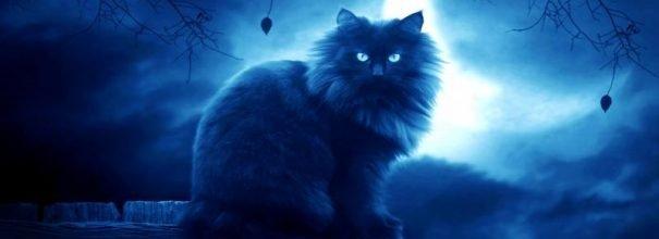 К чему снятся коты и кошки