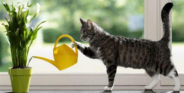 Кошка поливает цветок на подоконнике