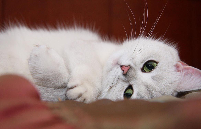 пересадить красивые картинки для любимой с добрым утром котята борта