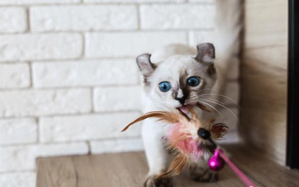 Котёнок с игрушкой