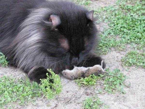 Кёрл с мышкой