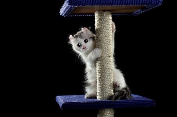 Котёнок с когтеточкой