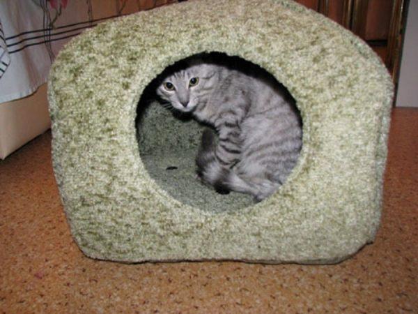 Кошка в тканевом домике