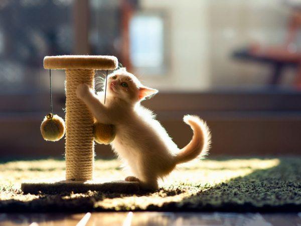 Котёнок точит когти о когтеточку