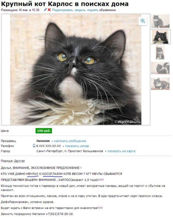 Объявление о пристройстве кота