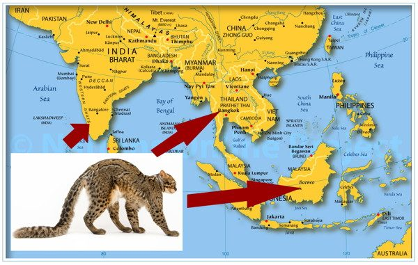Ареал обитания мраморной кошки