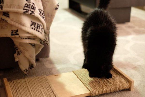 Кот обнюхивает когтеточку